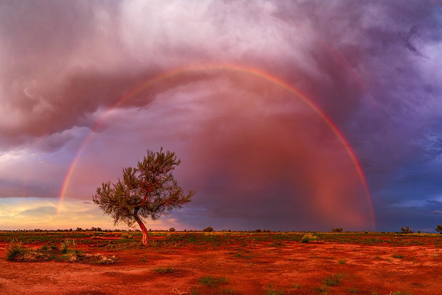 occupy-straatsnaps-beau-mitchell-quietachiever-rainbow-tree